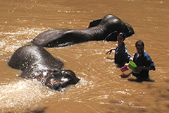 Bain dans un fleuve