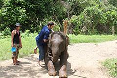 Montée sur le dos d'un éléphant