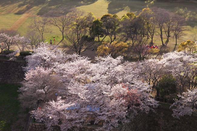 Vue du haut du château d'Osaka