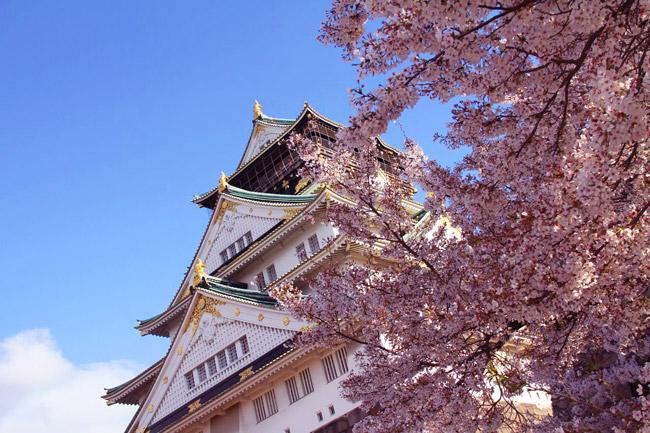 Sakura et château d'Osaka