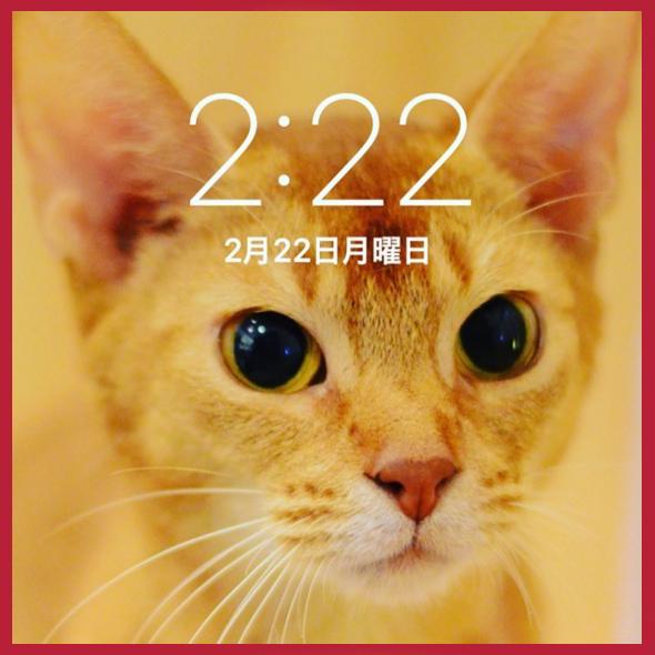 Cat day au Japon